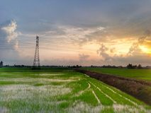 красивый вид рисовых полей дальше однажды вечером Стоковые Фото