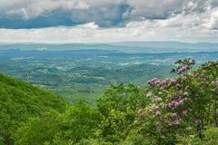 Красивый вид рододендрона Shenandoah Valley и Catawba стоковые изображения