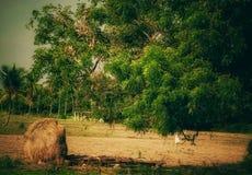 Красивый вид сельской Индии стоковое фото rf