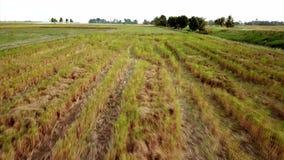 Красивый вид с воздуха холма в Kedah Малайзии около рисовых полей видеоматериал