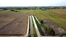 Красивый вид с воздуха холма в Kedah Малайзии около рисовых полей сток-видео