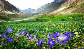 Красивый вид цветков в саде стоковые изображения rf