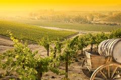 Красивый виноградник виноградины с старым экипажом бочонка  Стоковая Фотография