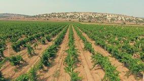 Красивый виноградник в крымских горах Вид с воздуха от вертолета видеоматериал