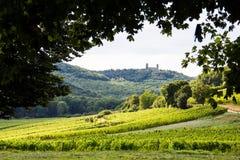 Красивый виноградник в Франции с старым замком на холме Стоковое Изображение RF