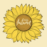 Красивый винтажный цветок солнцецвета Здравствуйте! осень Каллиграфия и литерность ручки щетки нарисованные рукой Дизайн для позд Стоковое фото RF