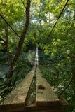 Красивый висячий мост в лесе Стоковая Фотография