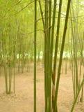 Красивый вид в бамбуковом лесе Стоковые Фотографии RF