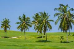 Красивый вид естественных тропических wi поля луга Стоковое Изображение