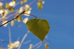 Красивый вид зеленых лист Стоковые Изображения
