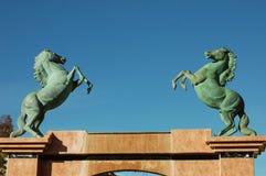 Красивый вид зеленых лошадей Стоковые Фото