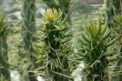 Красивый вид зеленых растений Стоковое Фото