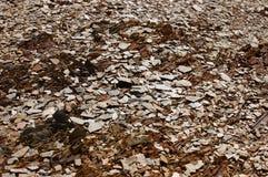 Красивый вид камней Стоковые Фотографии RF