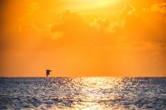 Красивый вид над морем Сценарная задняя часть восхода солнца и летящей птицы Стоковое фото RF