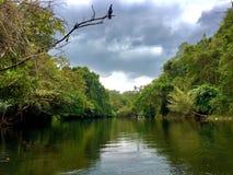 Красивый вид на озеро от konni Кералы стоковые фотографии rf