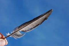 Красивый вид пера Стоковая Фотография RF