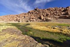 Красивый вид потока между горами вполне сочного vege Стоковые Фотографии RF