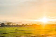 Красивый вид поля рисовых полей во время захода солнца Composi природы Стоковое фото RF