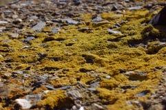 Красивый вид травы Стоковая Фотография