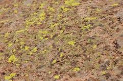 Красивый вид травы Стоковое Фото