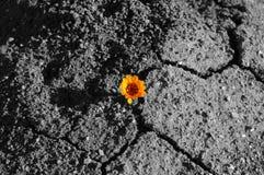 Красивый вид цветка Стоковое Фото