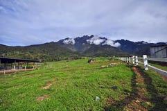 Красивый вид Mount Kinabalu Стоковая Фотография RF