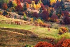 Красивый водопад в лесе осени, малая часть реки водопада водопадов Fotinski, гор Rhodope, Болгарии стоковые фотографии rf
