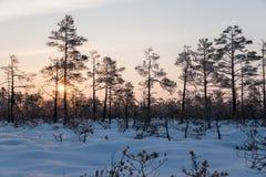 Красивый восход солнца в зиме стоковое фото rf
