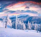 Красивый восход солнца зимы в прикарпатских горах с крышкой снега Стоковые Фото