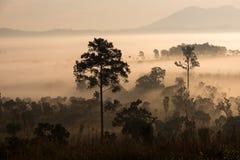 Красивый восход солнца зеленых холмов накаляя теплый, драматическое silhou блеска Стоковое Изображение