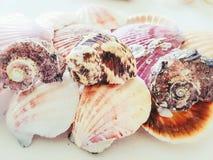 Красивый выбор необыкновенных раковин взморья Стоковые Изображения