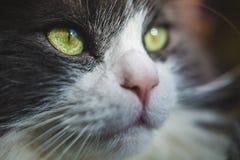 Красивый глаз кота стоковое изображение