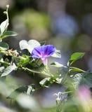 Красивый голубой цветок на природе Стоковые Фото