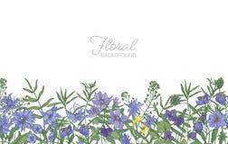 Красивый горизонтальный флористический фон украшенный с краем цветков голубого и фиолетового одичалого луга зацветая растущим в о Стоковая Фотография