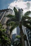 Красивый городской пейзаж Сингапура с небоскребами и пальмой Стоковая Фотография
