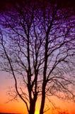 Красивый градуированный multicolor силуэт захода солнца большого дерева Стоковое Фото