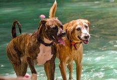 Красивый день на озере собаки стоковое фото