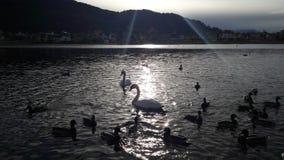Красивый день осени в озере Стоковое фото RF
