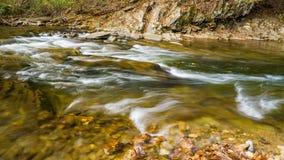 Красивый дикий поток форели горы стоковые фото