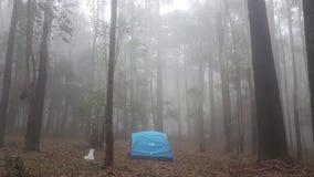 Красивый дождевой лес в Шри-Ланка стоковая фотография