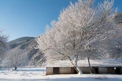 Красивый деревянный снег уборной во дворе покрыл ветви Стоковая Фотография