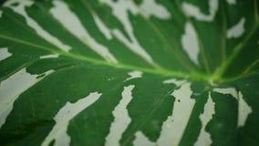 Красивый естественный зеленый цвет с белыми обоями Стоковые Изображения RF