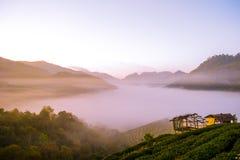 Красивый естественный ландшафт в зимнем времени в Таиланде Стоковые Фото