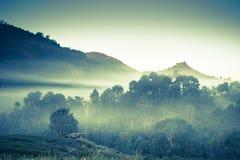 Красивый естественный ландшафт в зимнем времени в Таиланде Стоковые Изображения