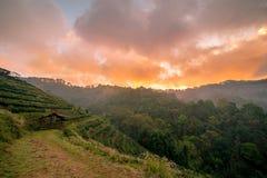 Красивый естественный ландшафт в зимнем времени в Таиланде Стоковая Фотография RF