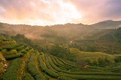 Красивый естественный ландшафт в зимнем времени в Таиланде Стоковые Фотографии RF