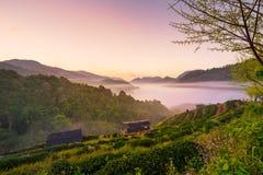 Красивый естественный ландшафт в зимнем времени в Таиланде Стоковая Фотография