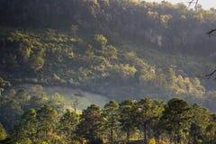 Красивый естественный ландшафт в зимнем времени в Таиланде Стоковые Изображения RF