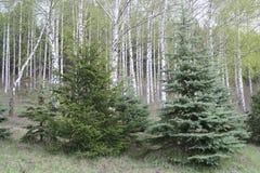 Красивый естественный ландшафт леса лета Стоковые Фото