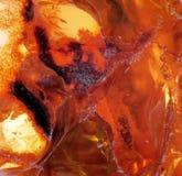 Красивый естественный прибалтийский янтарь Стоковые Изображения